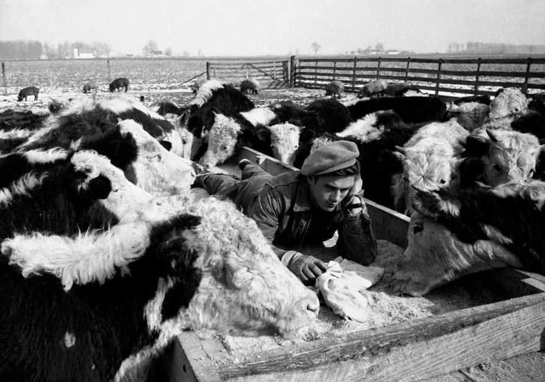 6_James-Dean-Dennis-Stock-Photo-Farm-Animals