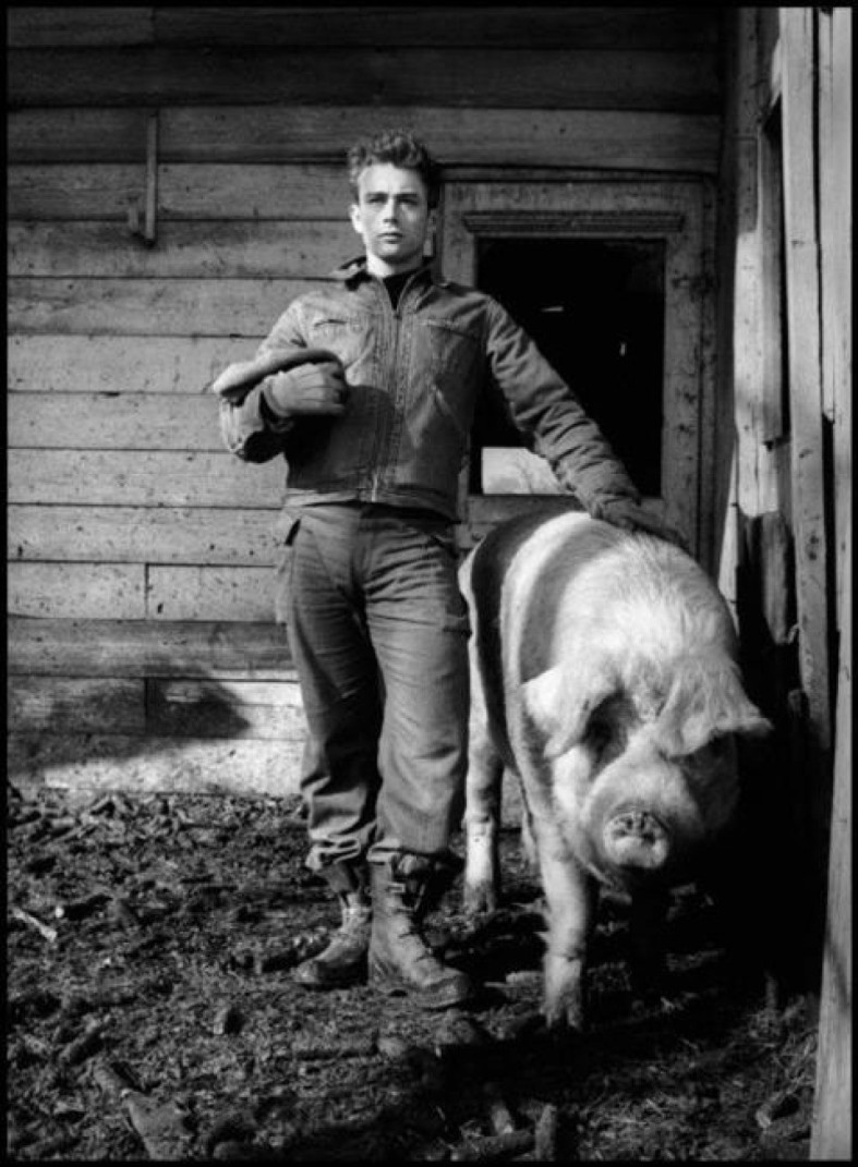 7_dennis_stock_james_dean_and_pig_960x640